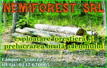 thumb_350_NEMIFOREST.125818.7.4378.1_8.1.jpg